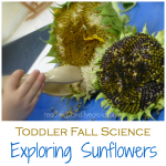 Toddler Science with Sunflowers
