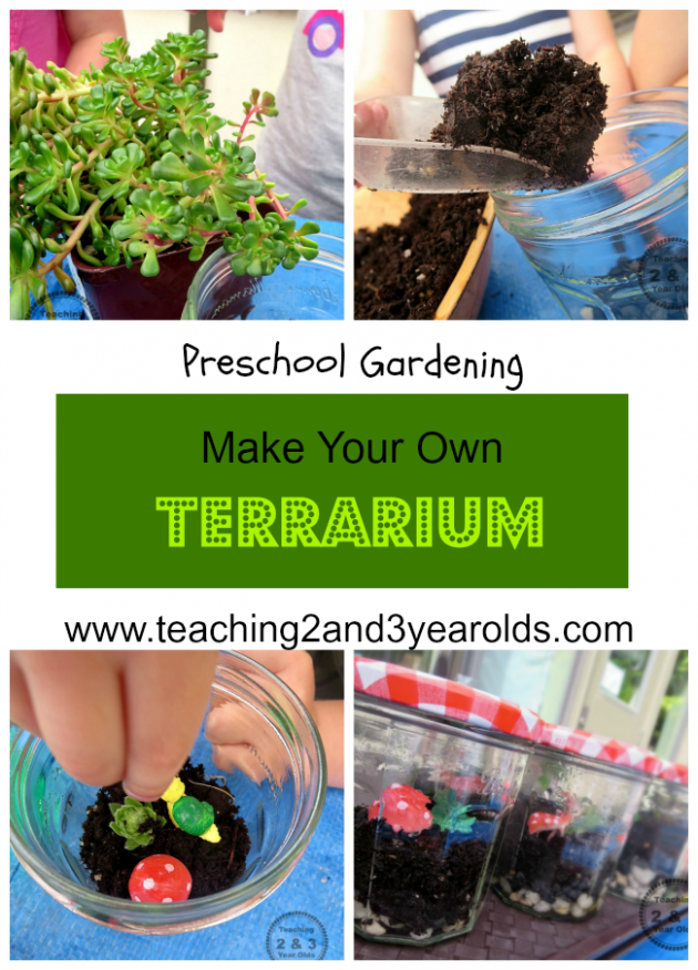 How to make a terrarium with kids for Indoor gardening lesson