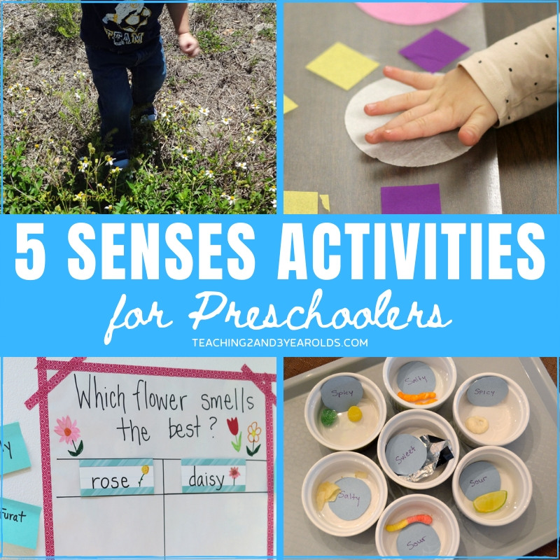 preschool activities for the 5 senses