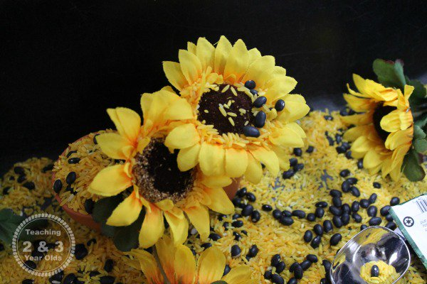 How to Make a Preschool Sunflower Sensory Table