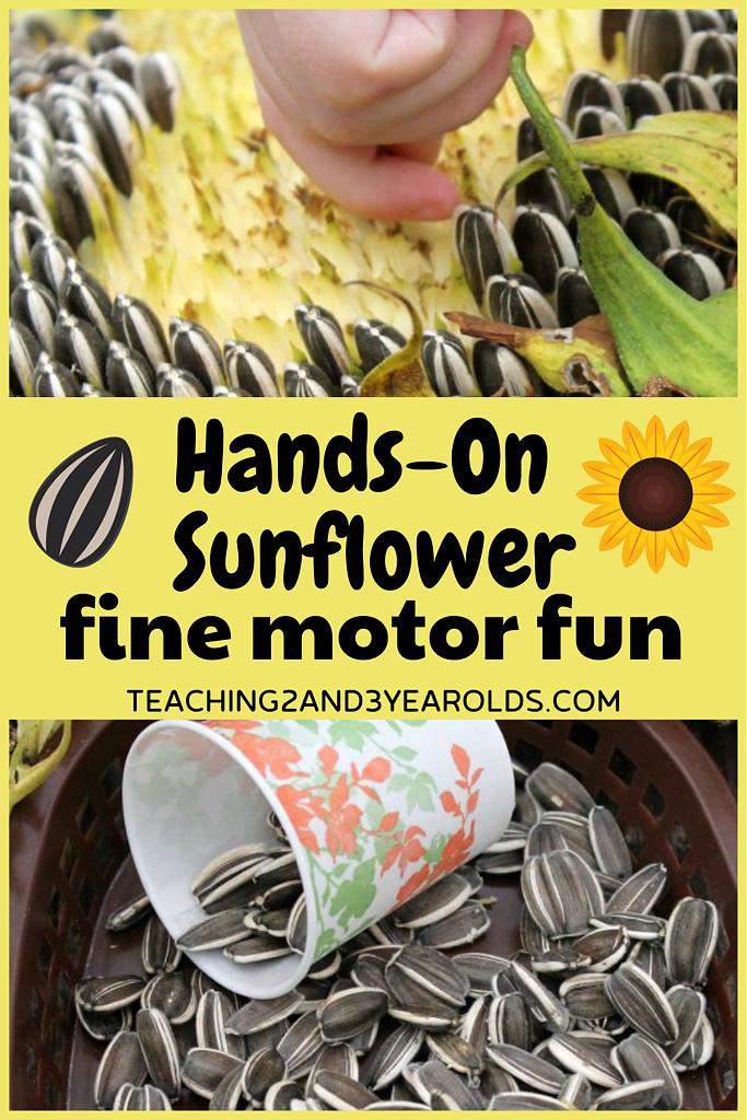 preschool sunflower activity