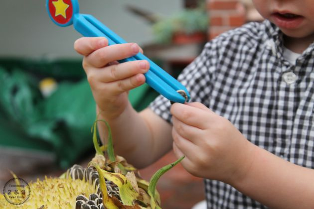 Fine Motor with Sunflowers