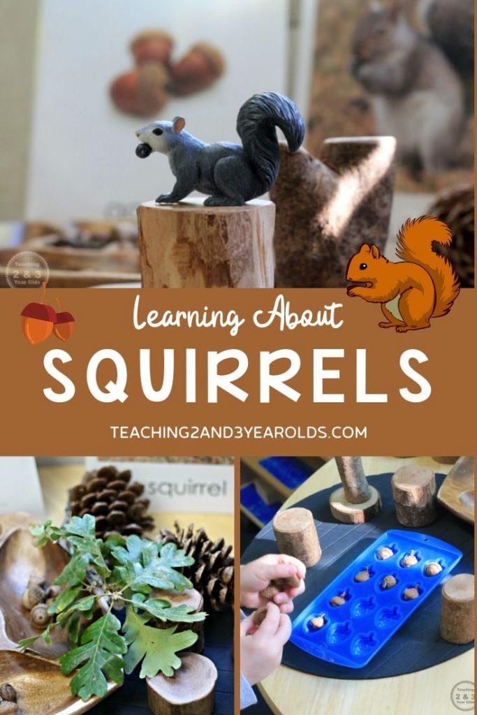 Preschool Squirrel Activities