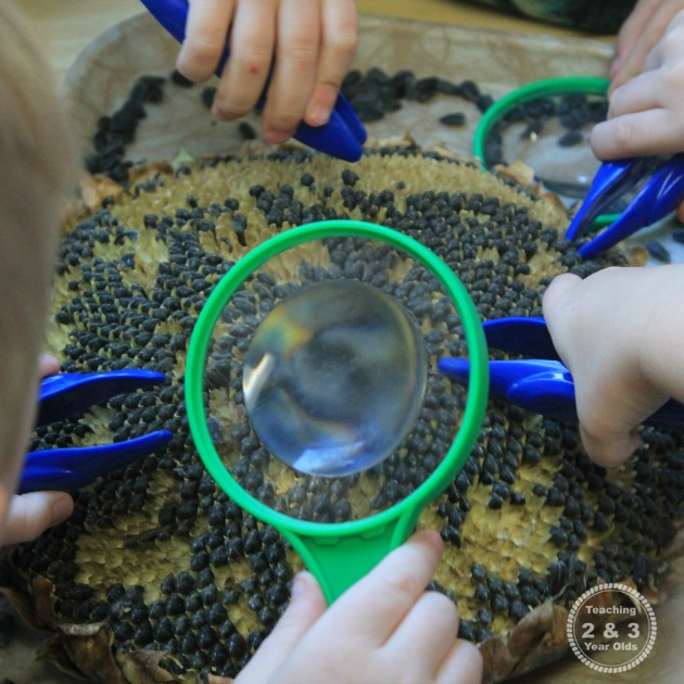 Preschool Science Ideas for Fall