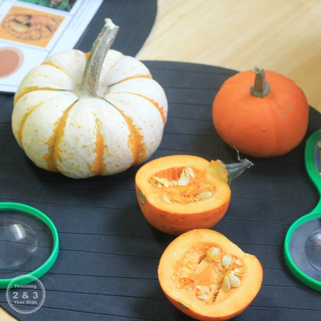 Explore Nature with These Preschool Science Ideas for Fall