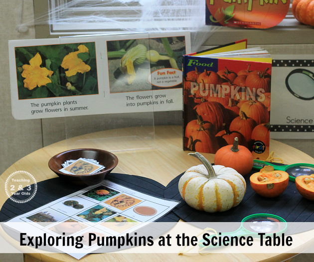 exploring pumpkins at the science table