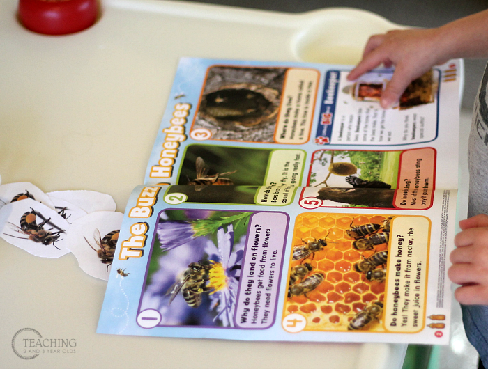 Learning About Bees with PreschoolersFun Activities for the Preschool Bee Theme