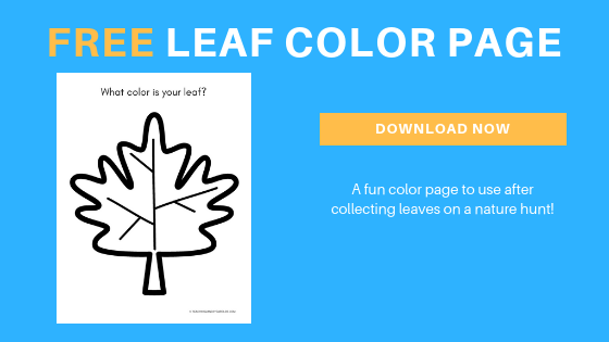free preschool leaf color page