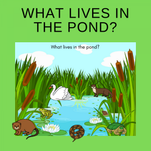 Free Who Lives in the Pond Printable Activity