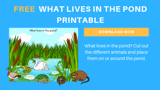 free preschool pond animals printable