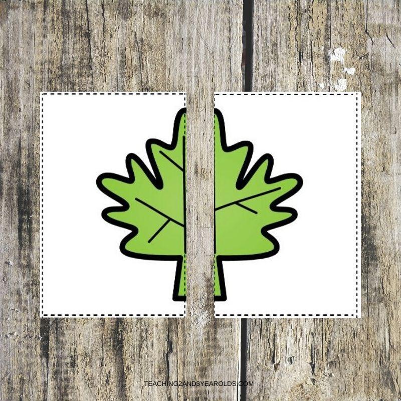 leaf color matching printable cards