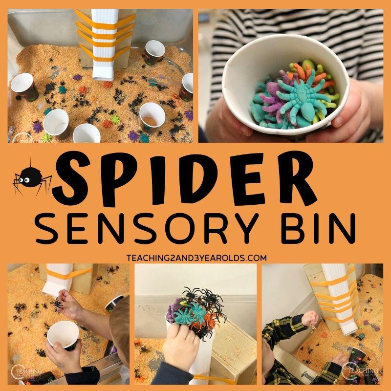 spider sensory bin